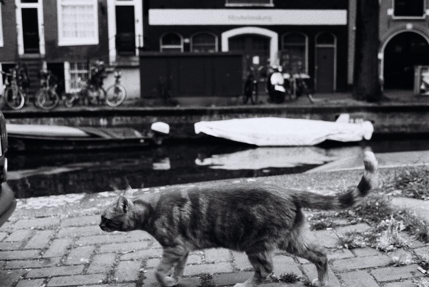 Amsterdam Wildlife   aaron spectre